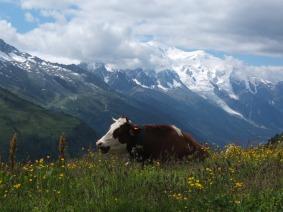 le-tour-du-mont-blancvache-973212925840449me