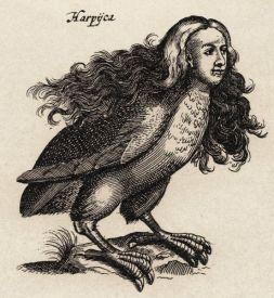 harpij_-_i-i_schipper_1660_graveur_matthius_merian_naar_j-jonstons_%22naekeurige_beschryvingh_van_de_natuur%22